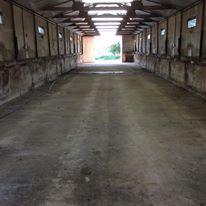 pig-shed-inside