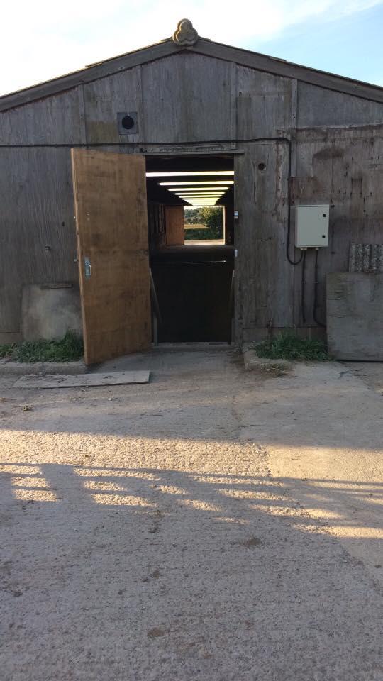 pig-shed-back-door
